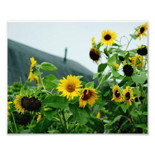 Fotografía soleada del deslumbramiento 10x8 arte fotográfico