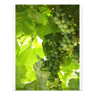 Fotografía sombreada de las uvas fotografia