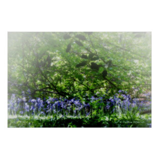 Fotografía soñadora de la bella arte de los bluebe póster