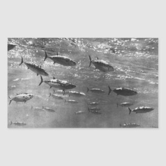 Fotografía subacuática blanco y negro de atunes pegatina rectangular