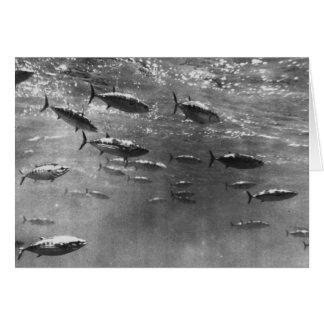 Fotografía subacuática blanco y negro de atunes tarjeta de felicitación