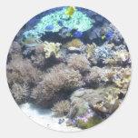Fotografía subacuática - pescado tropical colorido etiquetas redondas