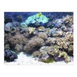 Fotografía subacuática - pescado tropical colorido postales