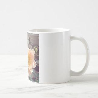 Fotografía subió mañana bonita taza de café