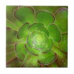 Fotografía suculenta verde radiante de la macro de tejas  ceramicas
