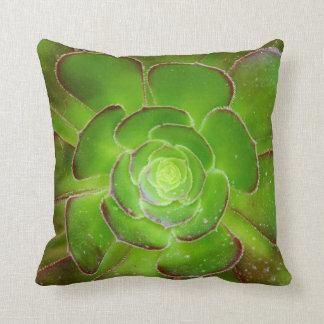 Fotografía suculenta verde radiante de la macro de cojín