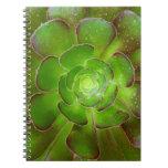 Fotografía suculenta verde radiante de la macro de libro de apuntes con espiral