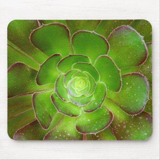 Fotografía suculenta verde radiante de la macro de mouse pads