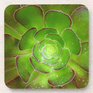 Fotografía suculenta verde radiante de la macro de posavasos