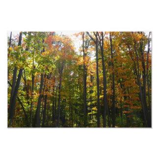 Fotografía Sunlit del paisaje del otoño del bosque Fotografía