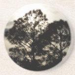 Fotografía surrealista blanco y negro de los árbol posavasos manualidades