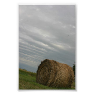 Fotografía única del arte de la granja de las cojinete