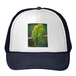 Fotografía verde de los pájaros del amor de los gorras de camionero