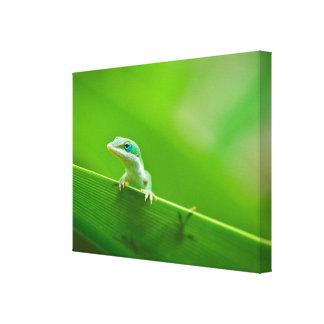Fotografía verde del arte del encuentro del lagart
