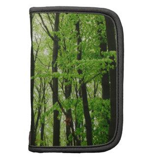 Fotografía verde del bosque, paisaje de la natural planificadores