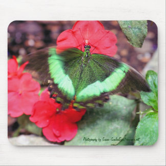 Fotografía verde Mousepad de la naturaleza de la