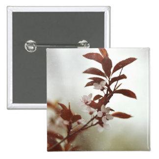 Fotografía vieja de la flor del árbol de la primav pins