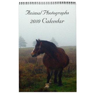 Fotografías animales, calendario 2010