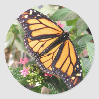 Fotografías de la mariposa de monarca pegatina redonda