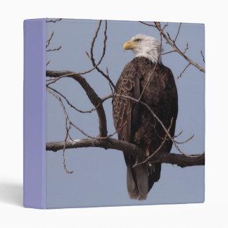 Fotografías: pájaros -