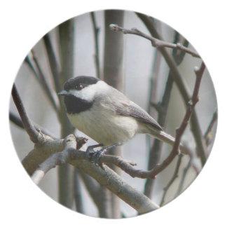 Fotografías: pájaros - plato