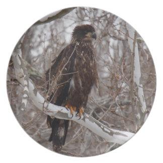 Fotografías: pájaros - plato para fiesta