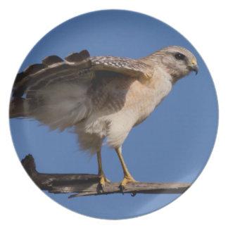 Fotografías: pájaros - platos de comidas