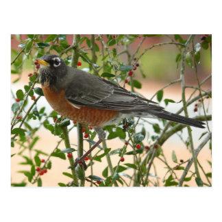 Fotografías: pájaros - postales