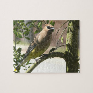 Fotografías: pájaros - puzzle