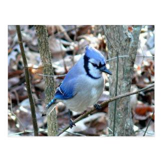 Fotografías: pájaros - tarjetas postales