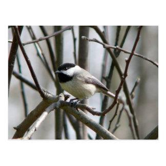 Fotografías pájaros - postal
