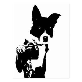 Fotógrafo canino tarjetas postales