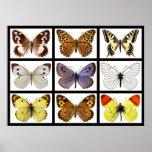 Fotos del mosaico de mariposas póster