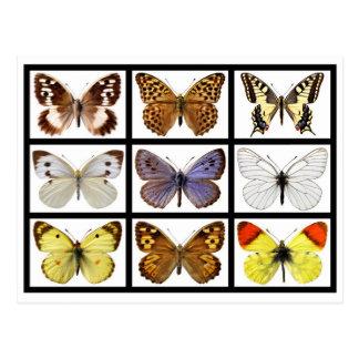 Fotos del mosaico de mariposas postal