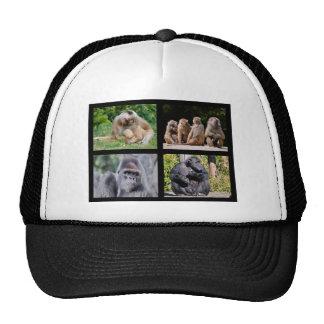 Fotos del mosaico de monos gorra