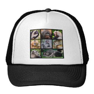 Fotos del mosaico de monos gorras