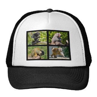 Fotos del mosaico de monos gorro de camionero