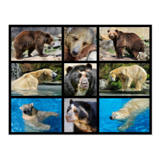 Fotos del mosaico de osos postal