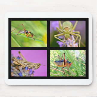 Fotos del mosaico de saltamontes alfombrilla de ratón