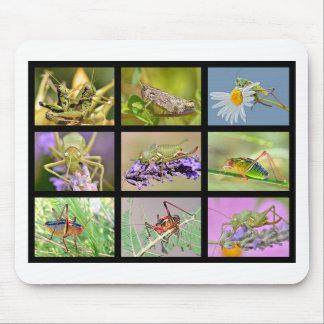 Fotos del mosaico de saltamontes alfombrilla de ratones
