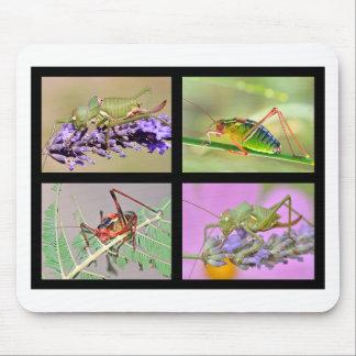 Fotos del mosaico de saltamontes tapete de ratón