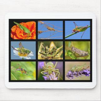 Fotos del mosaico de saltamontes tapete de raton