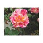 Fotos en la lona - color de rosa rosado impresiones en lienzo estiradas
