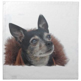 Fotos lindas de la chihuahua fijadas de cuatro servilletas