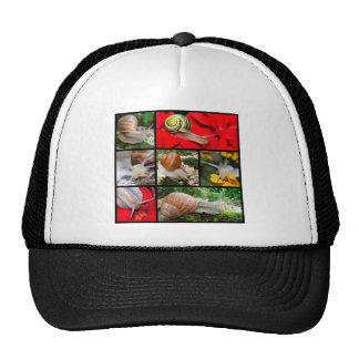 Fotos múltiples de caracoles gorra