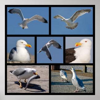 Fotos múltiples de gaviotas posters