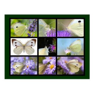 Fotos múltiples de la mariposa blanca grande postal