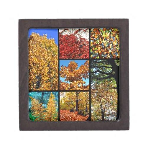 Fotos múltiples del follaje del otoño caja de joyas de calidad