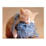 ¡Fotos preciosas del gato y del gatito, regalos - Postal