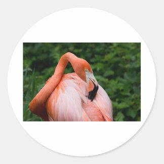 Fotos salvajes de la imagen de la foto de los pegatina redonda